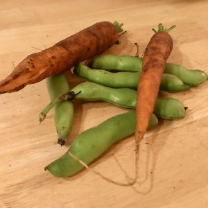 health-food-carrots-pick-your-own
